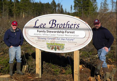 Forests For Cranberries