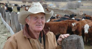 Heaton Livestock Company