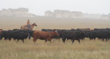 Hoeme Family Farm and Ranch