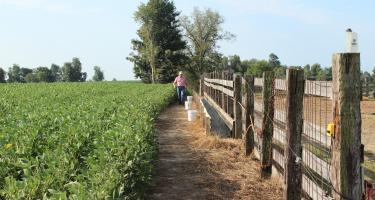 Springhill Farms