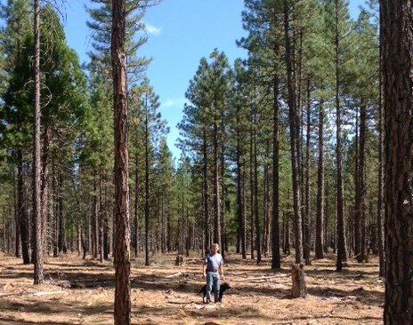 On the Stents' Thousand Springs Ranch in California – thinned forest