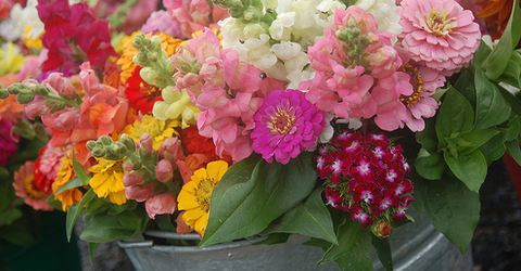 Flower crop from Sunnyside - photo courtesy of thefarmatsunnyside.com
