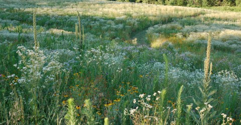 Wildflowers from Sunnyside - photo courtesy of thefarmatsunnyside.com